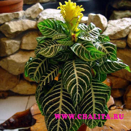 Комнатные растения с доставкой в усть