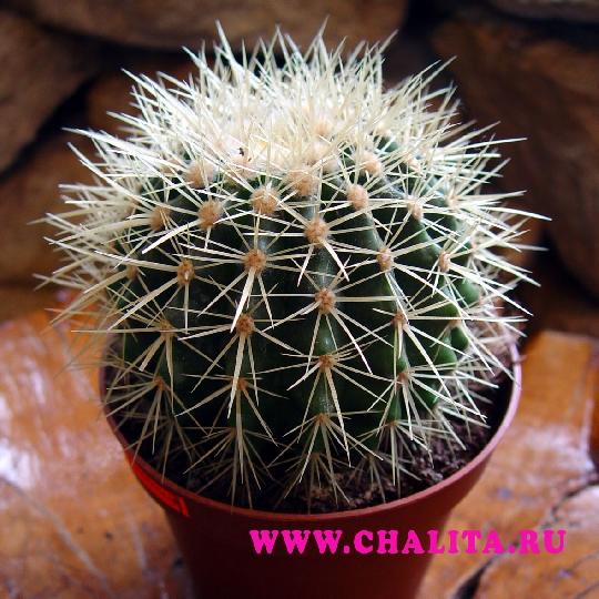 Комнатных растений предметов в чехле